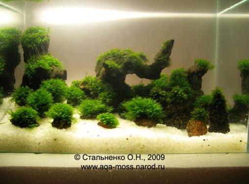 Выращивание мхов аквариумных 35